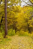 Photo of orange autumn forest with leaves and road Royalty Free Stock Photography