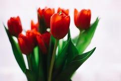 Photo of Orange Tulips Stock Image