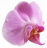 Photo of orchid flower. Royalty Free Stock Images