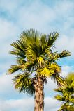 Photo of palm trees against the sky royalty free stock photos