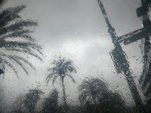 Photo of palm trees behind a glass . Photo of palm trees behind a glass in a day that is raining inside a car Stock Image