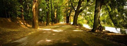 Photo panoramique de la voie par les arbres en parc Image stock