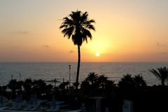 Photo panoramique du bord de la mer avec des paumes au coucher du soleil photos stock