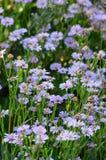 Photo par la camomille de lavande sur le fond du bouquet de tache floue Photo libre de droits