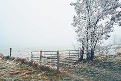 Pasture hoarfrost winter scene royalty free stock photo