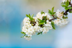 Photo of the peach branch Royalty Free Stock Images
