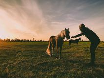 Photo of Person Near Horse Royalty Free Stock Images