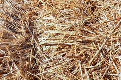 Background The natural texture of dry straw. Photo picture Background of The natural texture dry straw royalty free stock image