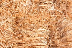 Background The natural texture of dry straw. Photo picture Background of The natural texture dry straw stock images