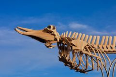Whale Mammal Skeleton. Photo Picture of the Dry Whale Mammal Skeleton royalty free stock images