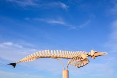 Whale Mammal Skeleton. Photo Picture of the Dry Whale Mammal Skeleton stock images