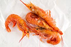 Fresh shrimps prawns. Photo picture of some fresh shrimps prawns fish food Stock Photo