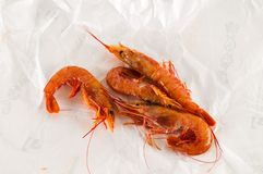 Fresh shrimps prawns. Photo picture of some fresh shrimps prawns fish food Stock Image