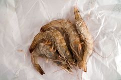 Fresh shrimps prawns. Photo picture of some fresh shrimps prawns fish food Stock Photography