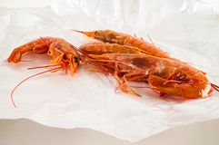 Fresh shrimps prawns. Photo picture of some fresh shrimps prawns fish food royalty free stock images