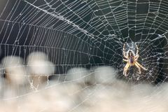 Spider and his Web stock image