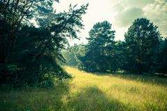 Photo of picturesque forest landscape Stock Image