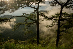 Photo of pine trees on the mountains with fog Royalty Free Stock Photo