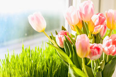 Photo of pink tulips against grass on windowsill Royalty Free Stock Photo