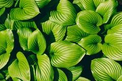 Photo of plant leaf background Stock Photo
