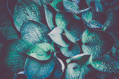 Photo of plant leaf background Royalty Free Stock Image
