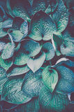 Photo of plant leaf background Royalty Free Stock Photo