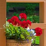 Geranium Pot royalty free stock images
