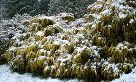 Photo of Plants Covered with Snow royalty free stock photo