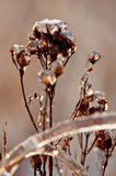 Photo plants frozen by frost Royalty Free Stock Photos