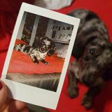Photo polaroïd d'un chien Photos libres de droits