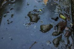Polluted drain. royalty free stock photos