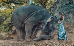 Photo présentant la femme apprivoisant un éléphant Photo stock