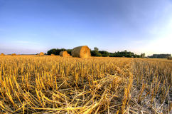 Bales of straw after harvest grain Stock Images