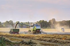 Harvester collects corn Royalty Free Stock Images