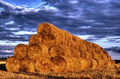 Stubble after harvest grain at sunset light Royalty Free Stock Image