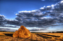 Stubble after harvest grain at sunset light Royalty Free Stock Images