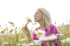 Photo of pretty blonde woman on a field Royalty Free Stock Photography