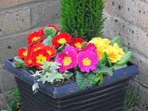 Potted flowers in small garden Royalty Free Stock Photo