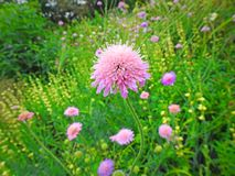 Victorian kent country garden countryside rural royalty free stock images