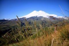 Photo propre de fond de ciel de ciel vert de nature Images libres de droits