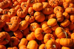 Photo of Pumpkins Royalty Free Stock Image