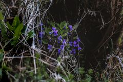 Photo of Purple Flowers Near Leaves Stock Images