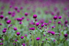 Photo of Purple and Green Flowers Stock Image