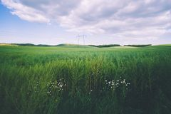 Pylons on the field in the foreground daisy flowers. Photo of Pylons on the field in the foreground daisy flowers royalty free stock photo