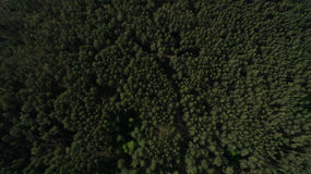 Photo from the quadrocopter of coniferous forest in summer Stock Photo