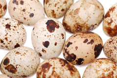 Photo of the quail egg Stock Images