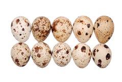 Photo of the quail egg Stock Image