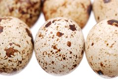 Photo of the quail egg Stock Photo