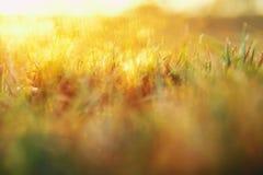 photo rêveuse abstraite de pré de ressort avec l'herbe à la lumière de coucher du soleil Photo libre de droits