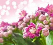 Photo rêveuse des fleurs de ressort Image libre de droits